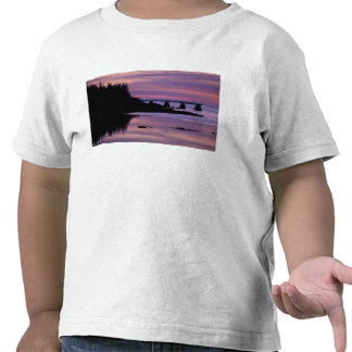 North America, US, ME, Isle Au Haut. Duck Shirts