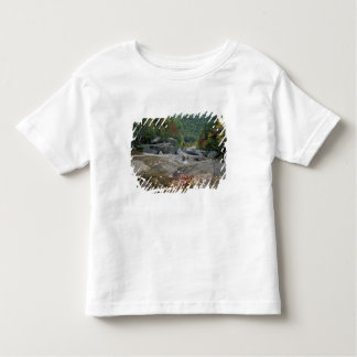 North America, US, NH, Fall foliage in New Toddler T-shirt