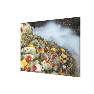 North America, US, NH, Fall in New England. Canvas Print
