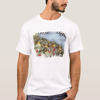 North America, US, NH, Fall in New England. T-Shirt