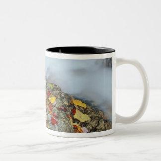 North America, US, NH, Fall in New England. Two-Tone Coffee Mug