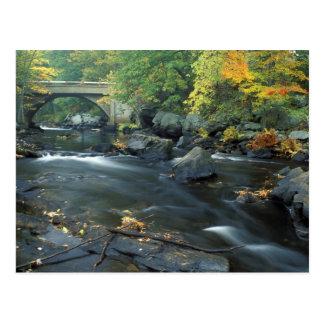 North America, US, NH, The bridge at Packers Postcard
