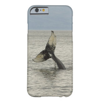 North America, USA, AK, Inside Passage. Humpback Barely There iPhone 6 Case