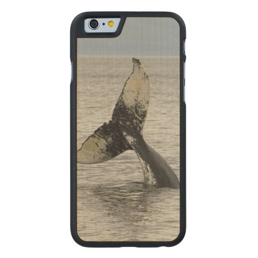 North America, USA, AK, Inside Passage. Humpback Carved® Maple iPhone 6 Case