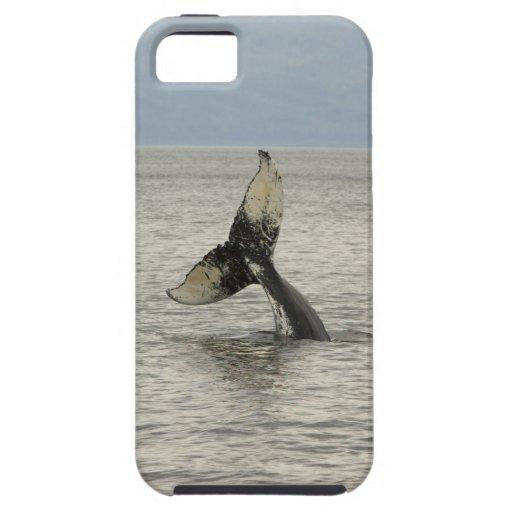 North America, USA, AK, Inside Passage. Humpback iPhone 5 Cases