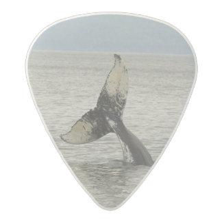 North America, USA, AK, Inside Passage. Humpback Acetal Guitar Pick