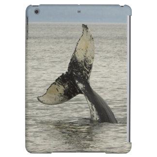 North America, USA, AK, Inside Passage. Humpback iPad Air Cases