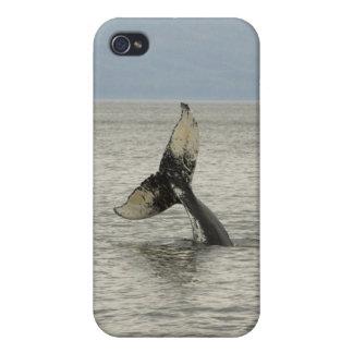 North America, USA, AK, Inside Passage. Humpback iPhone 4 Case