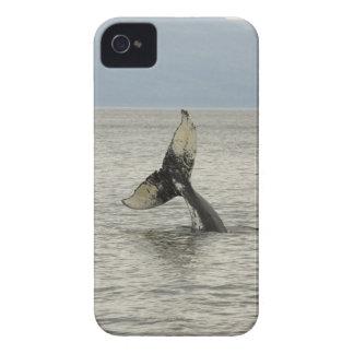 North America, USA, AK, Inside Passage. Humpback iPhone 4 Case-Mate Case