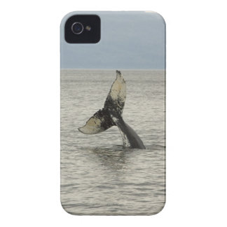 North America, USA, AK, Inside Passage. Humpback iPhone 4 Cases