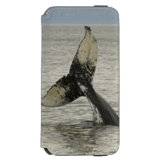North America, USA, AK, Inside Passage. Humpback iPhone 6/6s Wallet Case