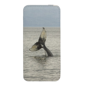 North America, USA, AK, Inside Passage. Humpback iPhone SE/5/5s/5c Pouch