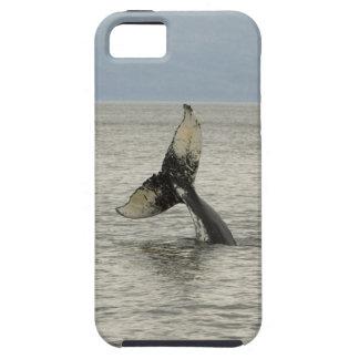 North America, USA, AK, Inside Passage. Humpback iPhone SE/5/5s Case