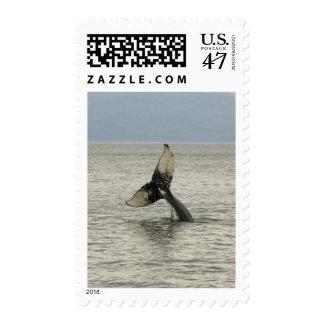 North America, USA, AK, Inside Passage. Humpback Postage
