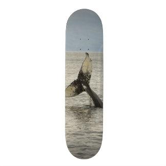 North America, USA, AK, Inside Passage. Humpback Skateboard