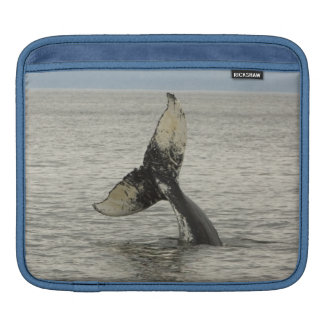 North America, USA, AK, Inside Passage. Humpback Sleeve For iPads