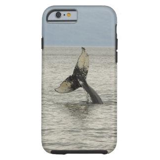 North America, USA, AK, Inside Passage. Humpback Tough iPhone 6 Case