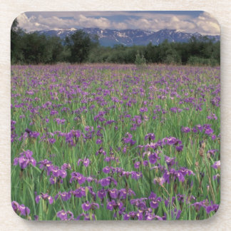 North America, USA, Alaska, Anchorage, Eklutna Beverage Coaster