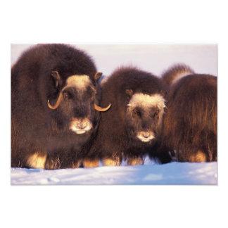 North America, USA, Alaska, Arctic Circle, Photo Art