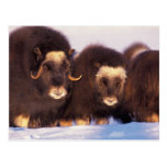 North America, USA, Alaska, Arctic Circle, Postcard