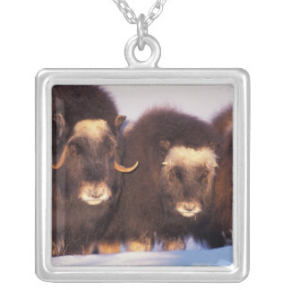 North America, USA, Alaska, Arctic Circle, Silver Plated Necklace