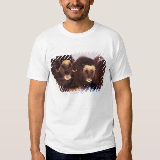 North America, USA, Alaska, Arctic Circle, Tshirts