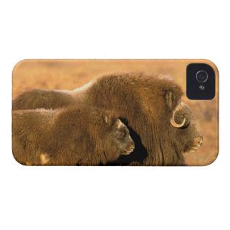 North America, USA, Alaska, Arctic National iPhone 4 Case