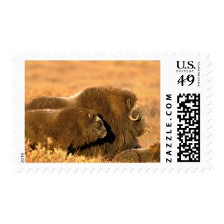 North America, USA, Alaska, Arctic National Postage