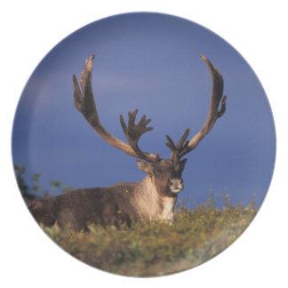 North America, USA, Alaska, Denali National Melamine Plate