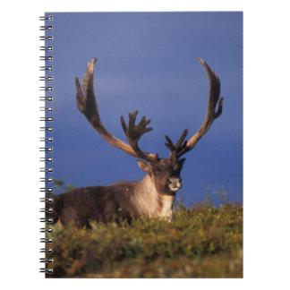 North America, USA, Alaska, Denali National Notebook