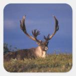North America, USA, Alaska, Denali National Square Sticker
