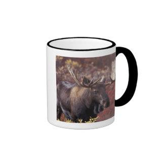 North America, USA, Alaska, Denali NP. Alces Ringer Mug