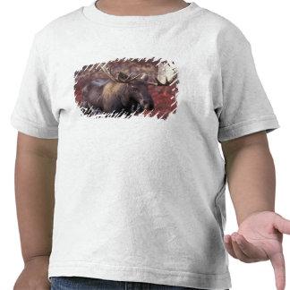 North America USA Alaska Denali NP Alces T Shirt
