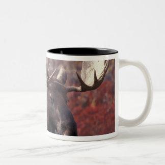 North America, USA, Alaska, Denali NP. Alces Two-Tone Coffee Mug