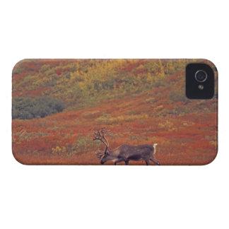 North America, USA, Alaska, Denali NP, Tundra. iPhone 4 Case