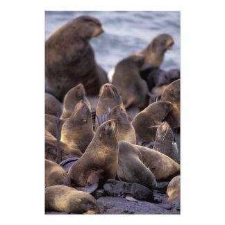 North America, USA, Alaska. Endangered Photo