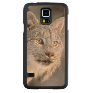 North America, USA, Alaska, Haines. Lynx (Felis 2 Carved® Maple Galaxy S5 Case