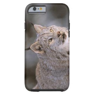 North America, USA, Alaska, Haines. Lynx (Felis 2 Tough iPhone 6 Case