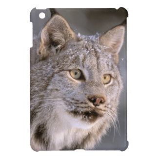 North America, USA, Alaska, Haines. Lynx (Felis 2 Case For The iPad Mini