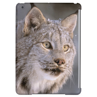 North America, USA, Alaska, Haines. Lynx (Felis 2 Cover For iPad Air
