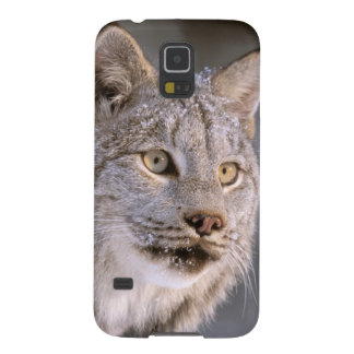 North America, USA, Alaska, Haines. Lynx (Felis 2 Galaxy S5 Cover