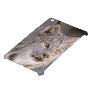North America, USA, Alaska, Haines. Lynx (Felis 2 iPad Mini Cover