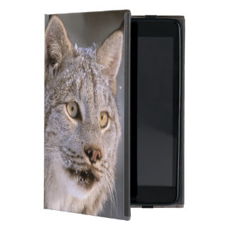 North America, USA, Alaska, Haines. Lynx (Felis 2 iPad Mini Covers