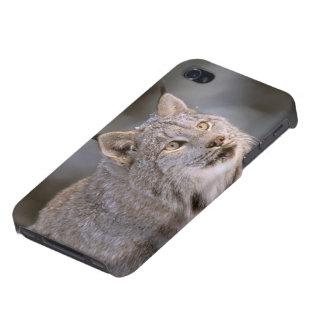 North America, USA, Alaska, Haines. Lynx (Felis 2 Cover For iPhone 4