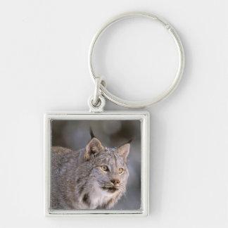 North America, USA, Alaska, Haines. Lynx (Felis 2 Keychain