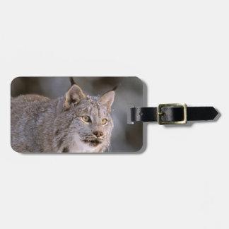 North America, USA, Alaska, Haines. Lynx (Felis 2 Luggage Tag