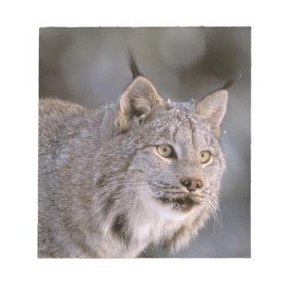 North America, USA, Alaska, Haines. Lynx (Felis 2 Note Pad