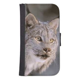 North America, USA, Alaska, Haines. Lynx (Felis 2 Phone Wallet