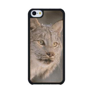 North America, USA, Alaska, Haines. Lynx (Felis 2 Carved® Maple iPhone 5C Slim Case