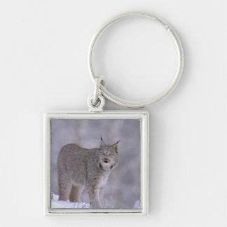 North America, USA, Alaska, Haines. Lynx (Felis Keychain